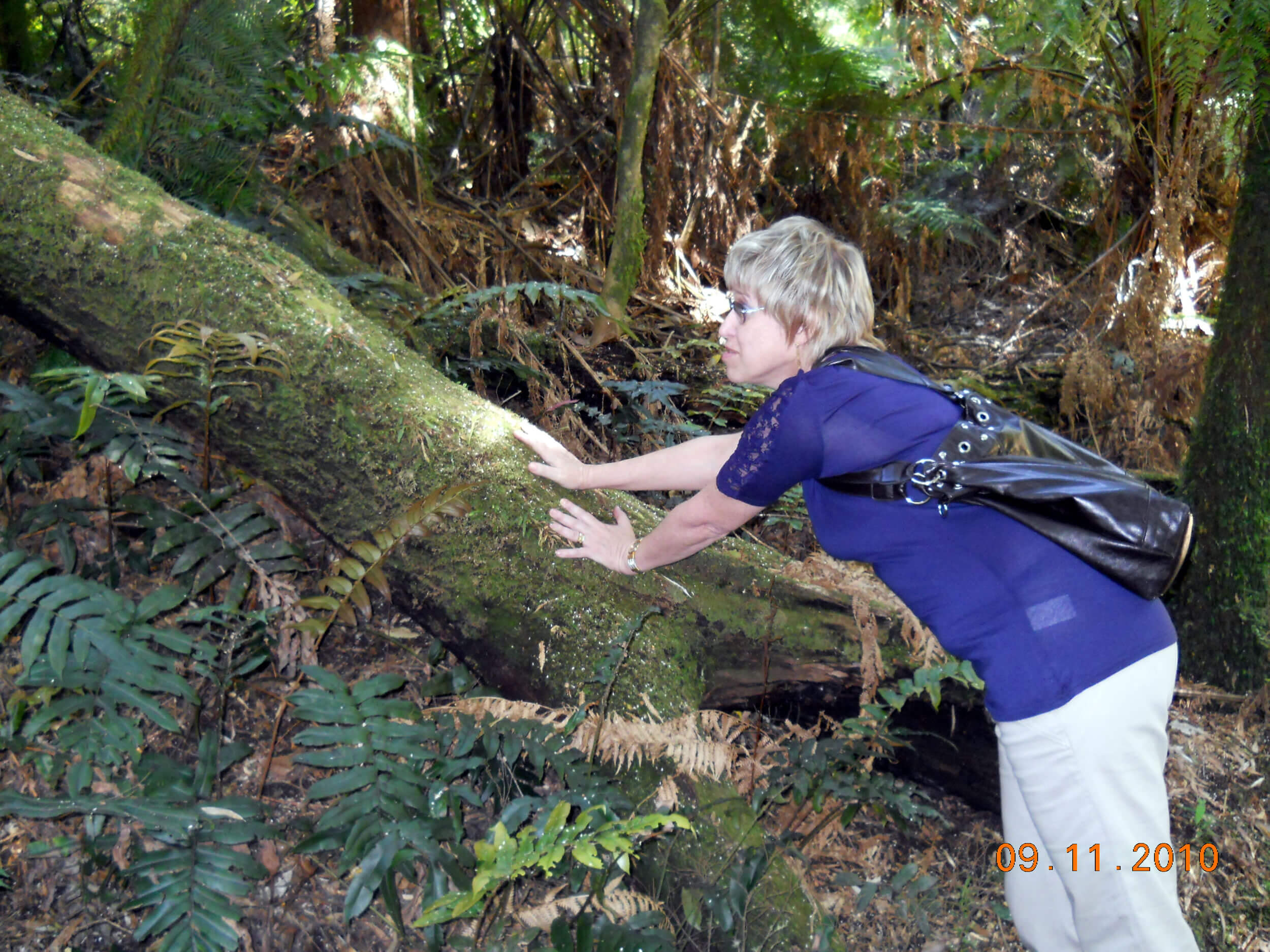 Photo of Dr Cay at Push Tree on the Great Ocean Rd