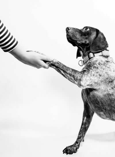 Photo of dog shaking paws with a human